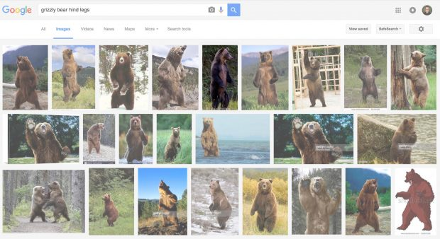 google-image-results-grizzly-bear